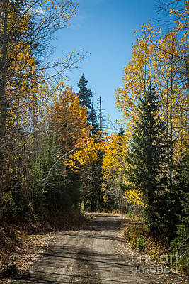 Photograph - Road To Fall Colors by Robert Bales