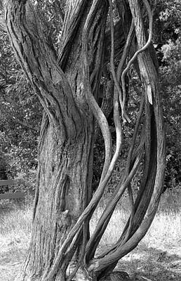 Photograph - Road To Hana Flora Study 5 by Robert Meyers-Lussier
