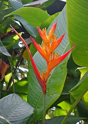 Photograph - Road To Hana Floral Study 3 by Robert Meyers-Lussier