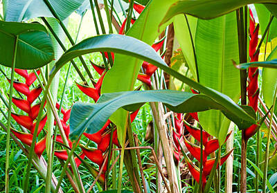 Photograph - Road To Hana Floral Study 4 by Robert Meyers-Lussier
