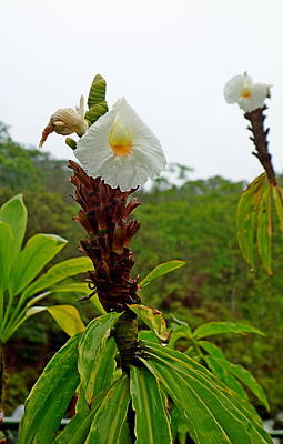 Photograph - Road To Hana Floral Study 7 by Robert Meyers-Lussier