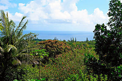 Photograph - Road To Hana Study 07 by Robert Meyers-Lussier