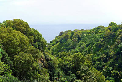 Photograph - Road To Hana Study 08 by Robert Meyers-Lussier