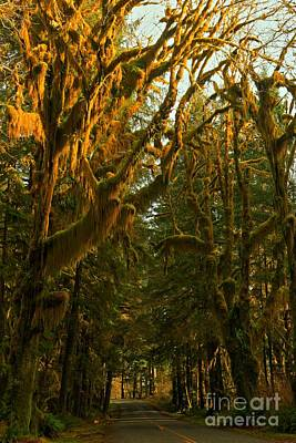 Photograph - Road To The Hoh Rainforest by Adam Jewell