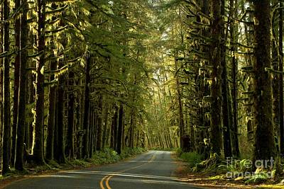 Photograph - Road To The Rainforest by Adam Jewell