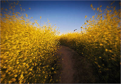 Road To Vincent Van Gogh  Original by Mirza Ajanovic