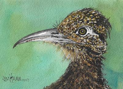 Roadrunner Drawing - Roadrunner Closeup by Jim Hamm