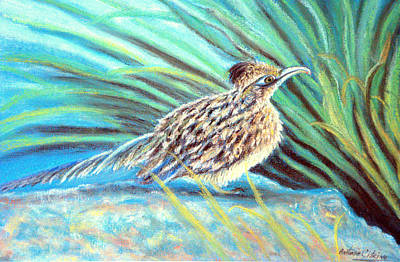 Roadrunner Fluffing Sold   Pastel Art Print by Antonia Citrino