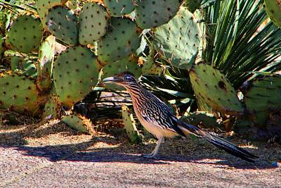 Photograph - Roadrunner by Kathryn Meyer