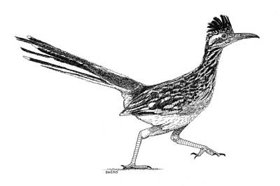 Roadrunner Drawing - Roadrunner by Scott Woyak