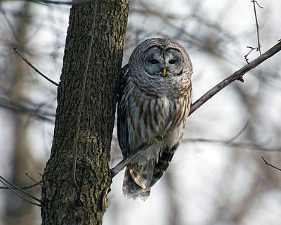 Roadside Barred Owl Art Print