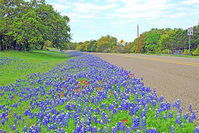 Photograph - Roadside Bluebonnets by Robert Anschutz