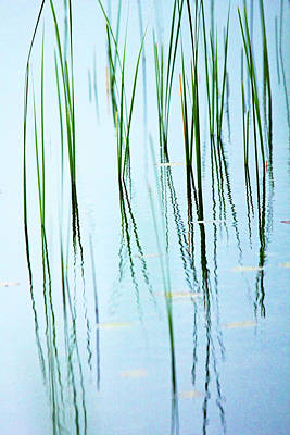 Photograph - Roadside Cattails Abstract by Debbie Oppermann