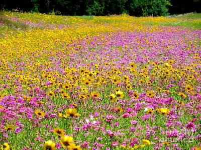 Pyrography - Roadside Flower Garden by Tim Townsend