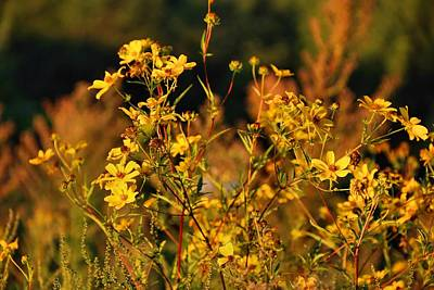 Photograph - Roadside Gold 1 by Kathryn Meyer