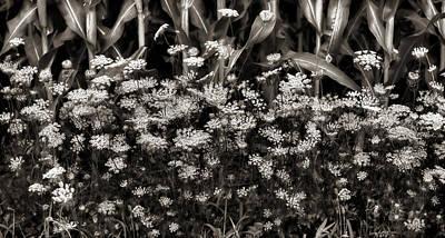 Photograph - Roadside Magic by Lori Deiter