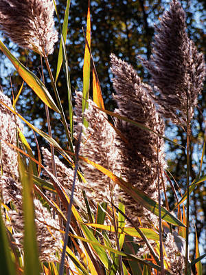 Photograph - Roadside Pampas by Leslie Montgomery