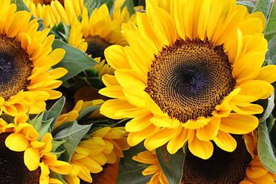 Photograph - Roadside Sunflowers by Dora Sofia Caputo Photographic Art and Design