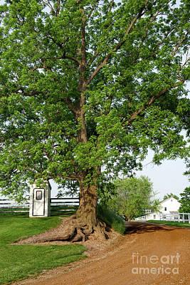 Photograph - Roadside Tree by David Arment