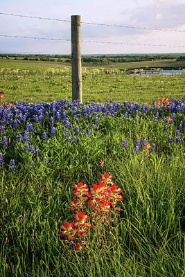 Photograph - Roadside Wildflowers In Brenham by Lynn Bauer