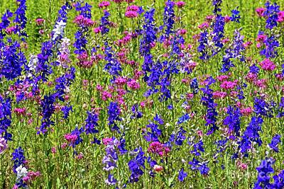 Photograph - Roadside Wildflowers In North Carolina by Willie Harper