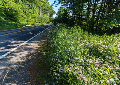 Rural Maine Roads Photograph - Roadside Wildflowers by Laurie Breton