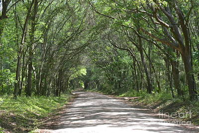 Art Print featuring the photograph Roadway To Mitchellville Beach by Carol  Bradley