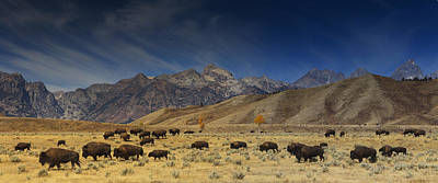 Teton Photograph - Roaming Bison by Mark Kiver