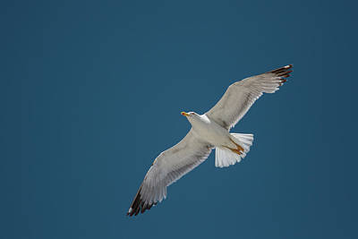 Photograph - Roaming The Sky by Michael Niessen