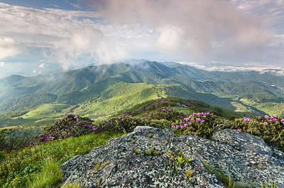 Roan Highlands - Grassy Ridge Rhododendron Art Print by Mark VanDyke