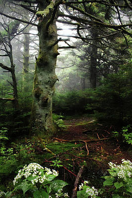 Photograph - Roan Mountain by Jessica Brawley