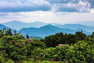 Roan Mountain Rhodos Art Print by Dale R Carlson