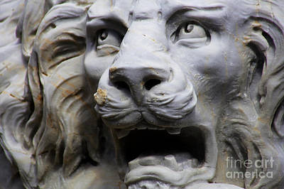 Photograph - Roaring Lion by Sue Harper