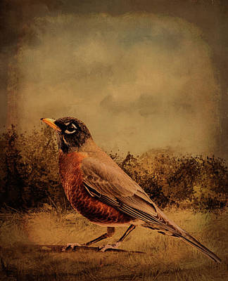 Bird Abstracts Digital Art - Robin Abstract Earthy Bronze by Linda Brody