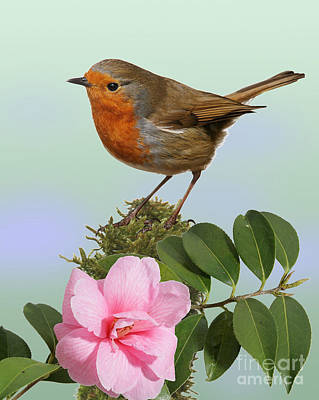 Photograph - Robin And Camellia Flower by Warren Photographic