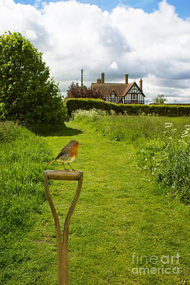 Country House Photograph - Robin At Country House by Amanda Elwell