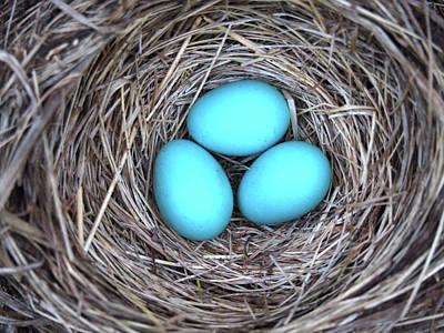 Photograph - Robin Eggs by Rod Stewart