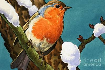Birds In Winter Wall Art - Painting - Robin by English School
