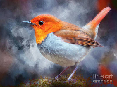Photograph - Robin I by Jack Torcello