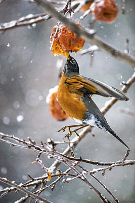 Photograph - Robin Hanging In There by Marty Saccone