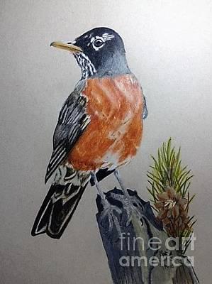 Pine Needles Drawing - Robin by Jamie Silker