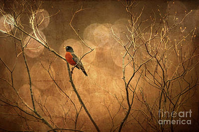 Avian Digital Art - Robin by Lois Bryan