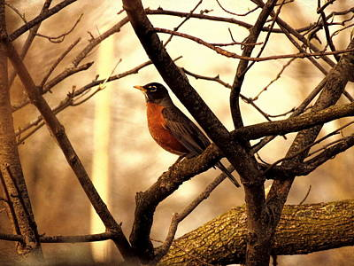 Photograph - Robin by Mike Flake