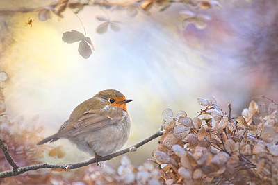 Robin On Dreams Print by Teuni