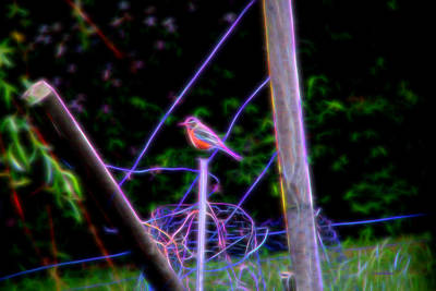 Manipulation Photograph - Robin On The Wires by EricaMaxine  Price