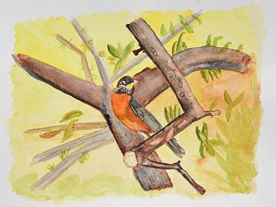 Robin On Tree Branch Original