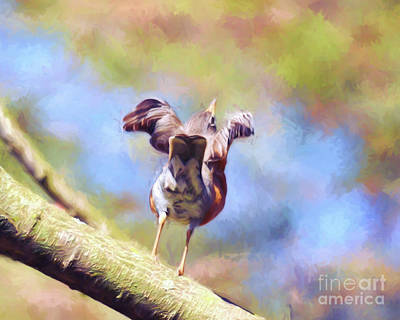 Photograph - Robin Readies For Take Off  by Kerri Farley of New River Nature
