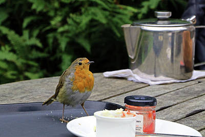 Photograph - Robin  by Tony Murtagh