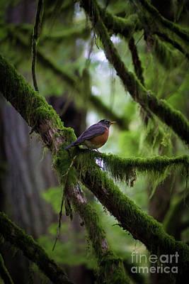 Photograph - Robin Vignette by Donna Munro