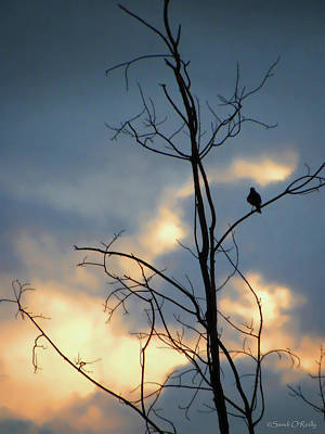 Art Print featuring the photograph Robin Watching Sunset After The Storm by Sandi OReilly